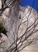 Rock Climbing Photo: Arm jam rest.