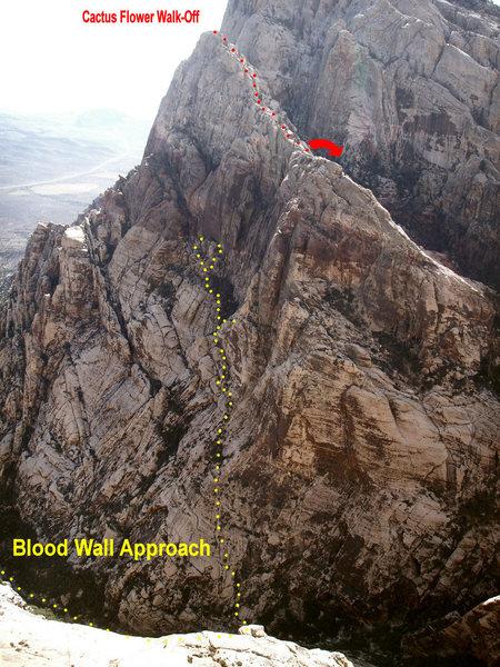 Rock Climbing Photo: Cactus Flower Tower Descent