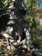 Rock Climbing Photo: Looking up a 5.5