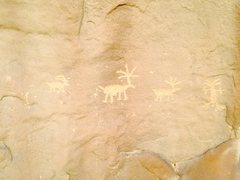 Rock Climbing Photo: Petroglyphs in the Late Bloomer area.
