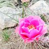 Cactus flower in Late Bloomer area.