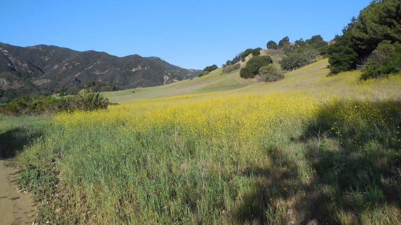 Rock Climbing Photo: Spring flowers