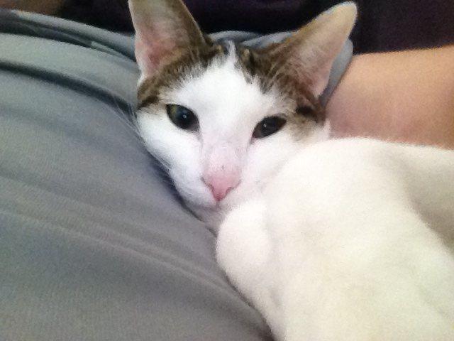 Pixie...my cat.