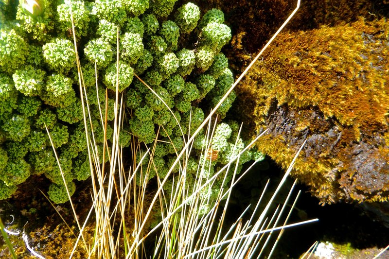 Plants near Laguna Paron