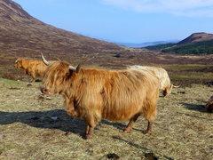 Rock Climbing Photo: more wildlife on the drive back to Edinburgh