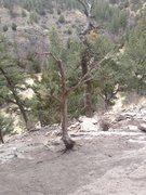 Rock Climbing Photo: Tree at base of Grendal