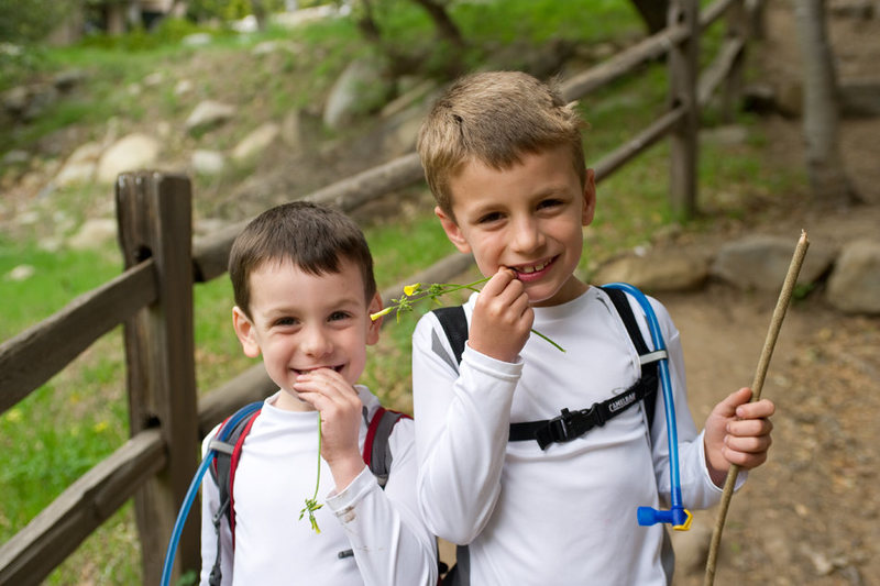Bryson & Wesley indulge in their favorite edible plant. San Ysidro trail, Santa Barbara.