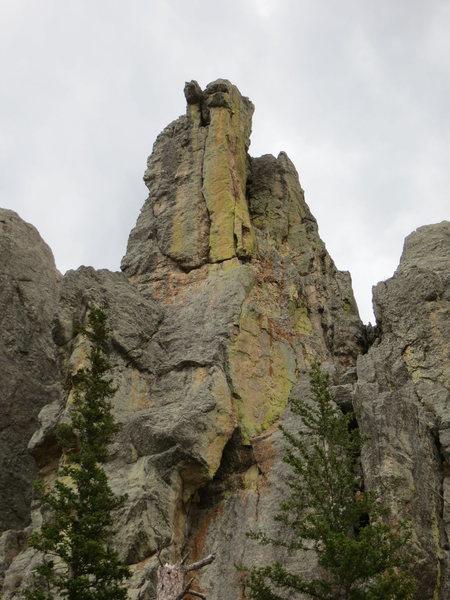 Rock Climbing Photo: Pretty bird...
