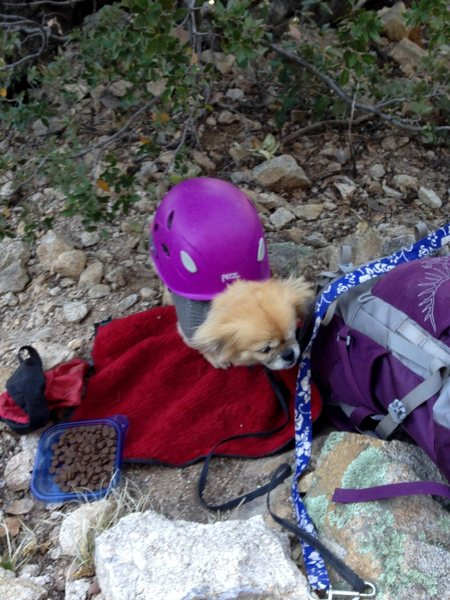 Mila wearing a helmet after being struck by a broken foothold.<br> <br> In all seriousness tie your dogs up outside the fall zone and have your belayer wear a helmet at this crag.