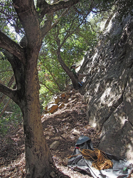 """A belayer startled from his nap against the tree at the base of """"Piano Lessons."""""""