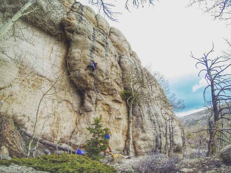 Rock Climbing Photo: Julie Ellison setting up for the crux move on Toma...