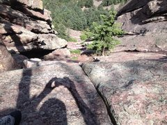 Rock Climbing Photo: Looking down from the highest tree ledge, not much...