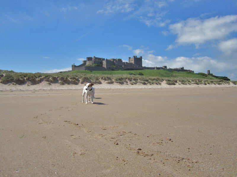 On the Beach . Bamburgh Castle. Northumberland coast