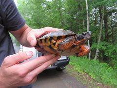Rock Climbing Photo: turtle