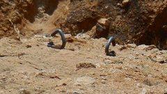Rock Climbing Photo: Choss Perot anchors.