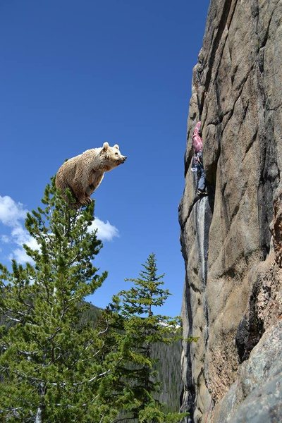Rock Climbing Photo: The Bears are aggressive this year