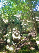 Rock Climbing Photo: Trees a little in way but corner/crack is pretty o...
