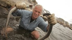 Rock Climbing Photo: Sea Lamprey