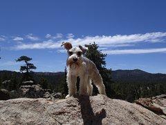 Rock Climbing Photo: crag dog