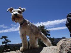 Rock Climbing Photo: Nismo the crag dog