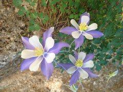 Rock Climbing Photo: FLOWERS! I smell like flowers!