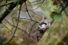 Rock Climbing Photo: Anna's Hummingbird nest & eggs
