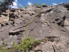 Rock Climbing Photo: Murder climbs up the center of the photo