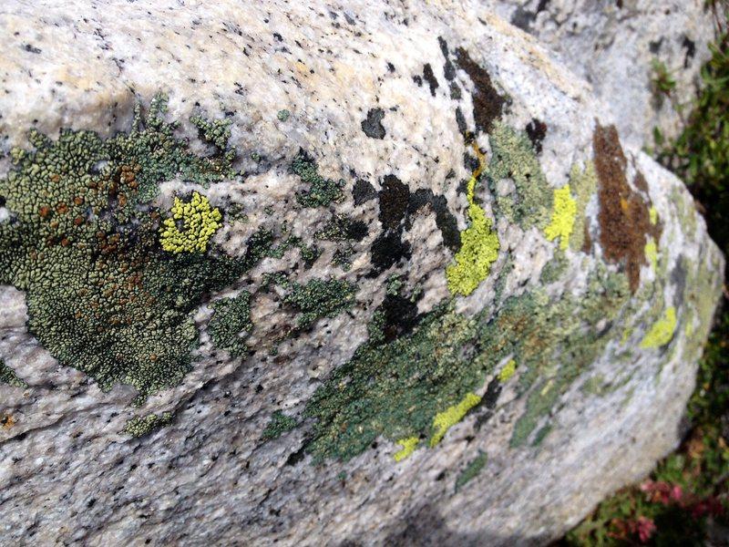 Rock Climbing Photo: Multi Colored Tahquitz!!!