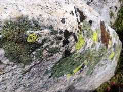 Rock Climbing Photo: Multi Colored Tahquitz!!!