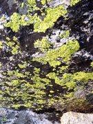 Rock Climbing Photo: North Gully Green!!!