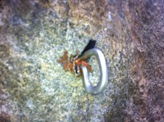 Rock Climbing Photo: Wave Bolt made by Bolt Products