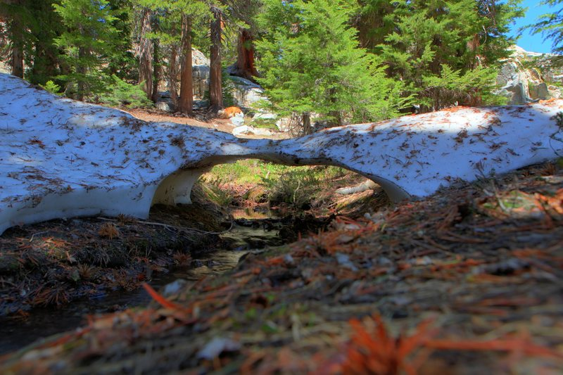 A snow bridge amongst the pines above TJ Lake.