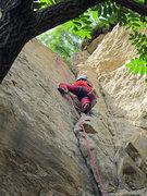 Rock Climbing Photo: Nemo gets to the top!