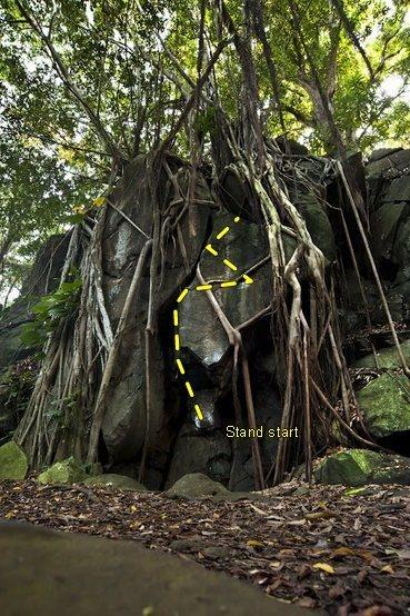 Roots topo