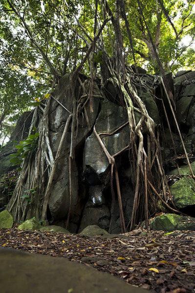 Roots Boulder