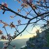 Spring in Siurana.