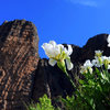 Beautiful spring day in Riglos.