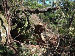 Overhanging boulder with storm damage.