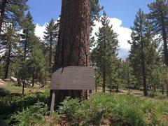 Rock Climbing Photo: North Creek Penny Pines Memorial Plantation (2N10)...
