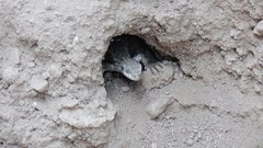 Rock Climbing Photo: Are there snakes in those holes? Not if there's a ...