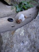 Rock Climbing Photo: What a rock pipe looks like. What bud looks like w...