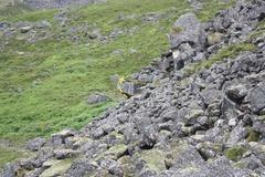 Rock Climbing Photo: Scareball