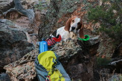 Rock Climbing Photo: Apollo Bubba Moose The Great. Seriously, it is on ...