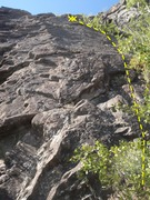 Rock Climbing Photo: Climb through the green on the right side of the p...