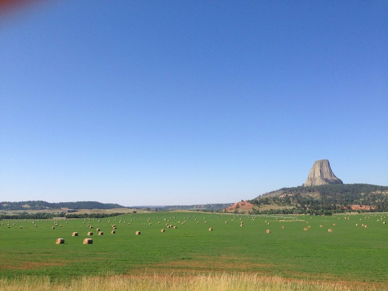 The August fields of a baleful Devil's Tower, WY