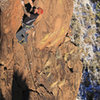 Leo moves from the easy slab to clean  steeper rock on the first ascent<br> DogGone It (5.10-)