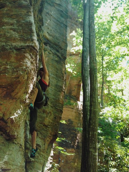 Rock Climbing Photo: Reserved Seating in the Summer