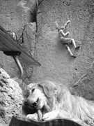 Rock Climbing Photo: Cruising JBs Seam while the pups enjoy a bone.