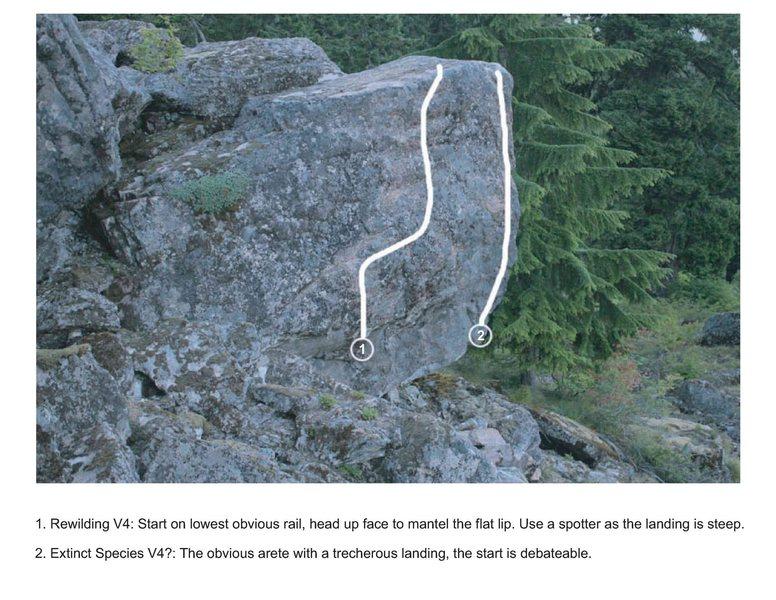 Rewilding boulder