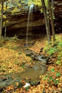 Cove Hollow